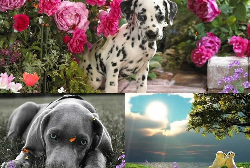 Lovely Dogs Screensaver