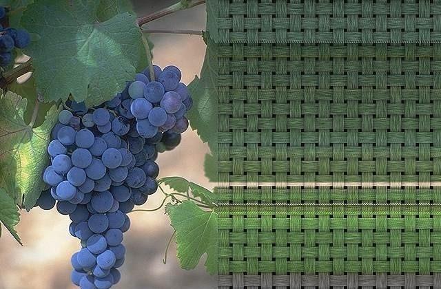 Sweet Fruits Screensaver dota frozen throne