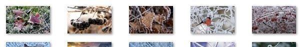 Frost on Plants Windows 7 Theme windows xp theme
